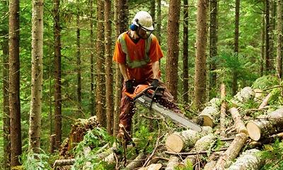Digitalisierte Forstwirtschaft